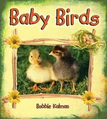 Baby Birds: It's Fun to Learn About Baby Animals