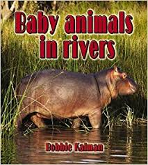 Baby Animals in Rivers: The Habitats of Baby Animals