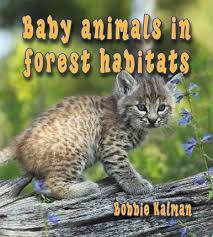Baby Animals in Forest Habitats:  The Habitats of Baby Animals